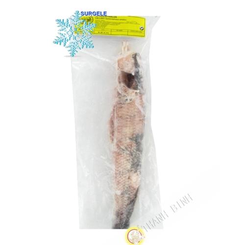 Poisson Ca Loc Ophiocephalus Entier kg