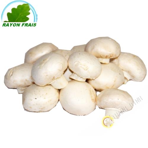 Champignon blanc