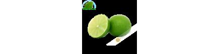Citron vert Bresil (kg)