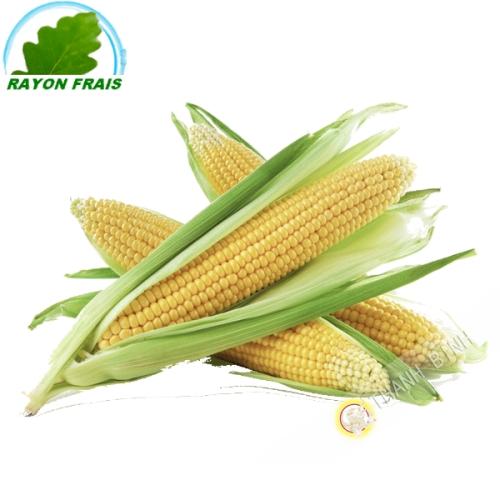 Maïs jaune (pièce)
