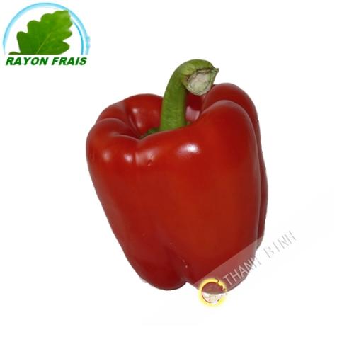 Poivron rouge (kg)