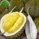 Durian Vietnam (kg)