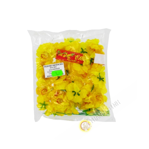 Yellow flower Hoa Mai for New Year Vietnam