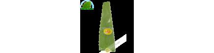 Aloe Vera Vietnam (room)- COST - Approx. 450g