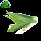 Aloe Vera (kg)