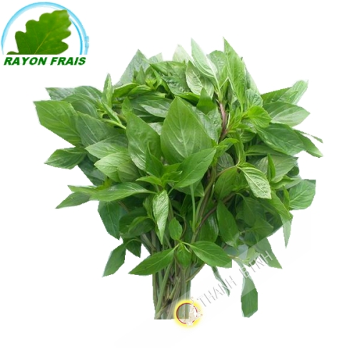 Basil Rau That Thailand 100g - FRESH
