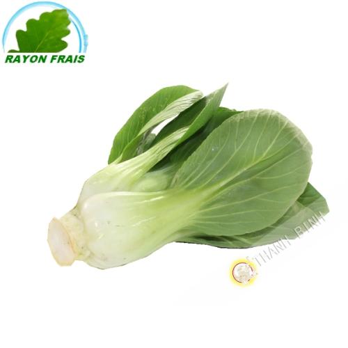Cabbage Shanghai (kg)