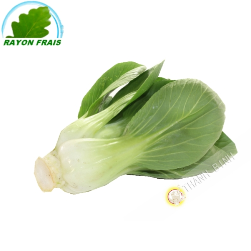 Cabbage Shanghai (800g)- COSTS