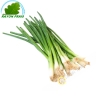 Chives FRANCE 200g - FRESH