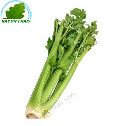 Celeri rama (kg)