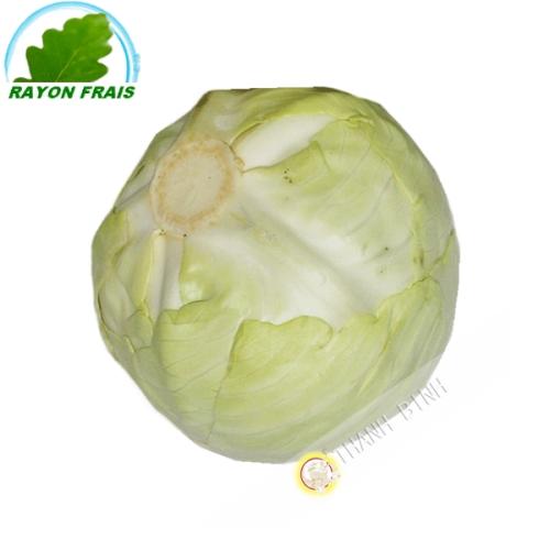 Chou blanc (kg)