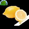 Lemon yellow Spain GM (3pcs)- COSTS