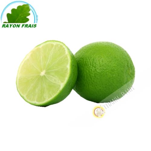 Citron vert (kg)