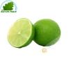 Lemon green Brazil (3pcs)- COSTS