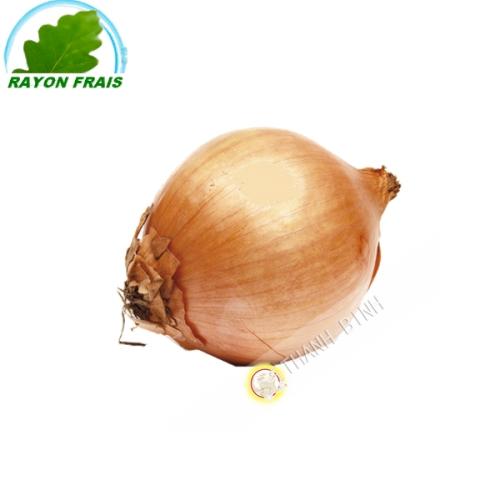 Cebolla blanca (kg)