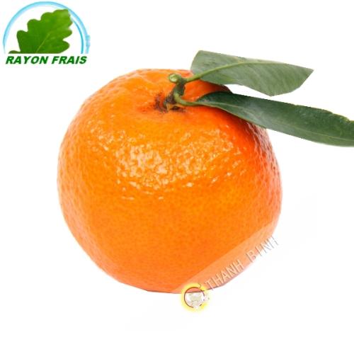 Clementine (kg)