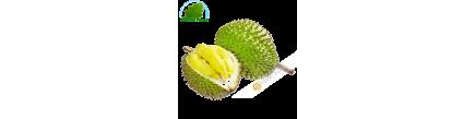 Durian, Vietnam (room)- COST - Approx. 2,5 -3 kgs