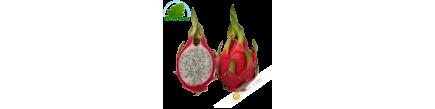 Fruit Dragon - Pittaya (pièce)- FRAIS - Env. 500g