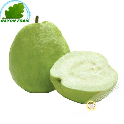 Guava Vietnam (kg)