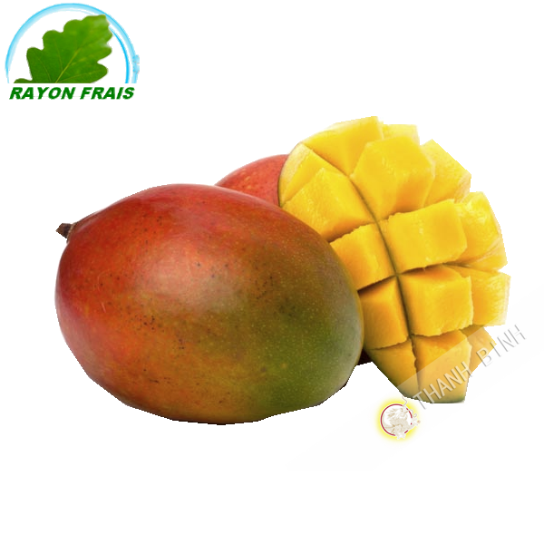 Mango Kent (parte)- COSTO - Ca. 500g