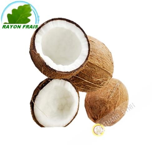 Coco peludo (pieza)