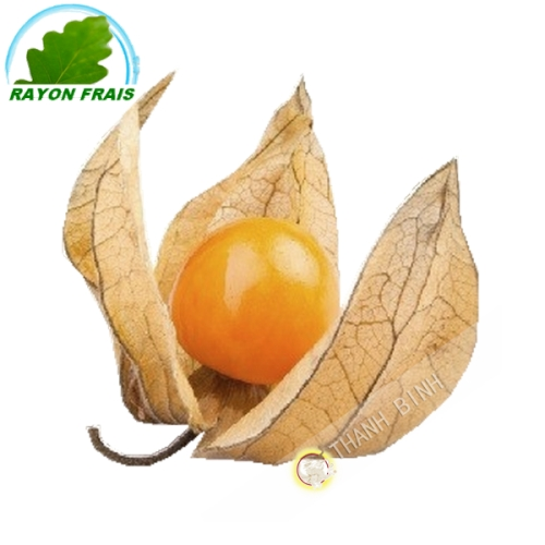 Physalis Colombia (punnet)- FRESH