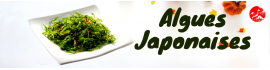 Alghe JP